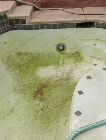 Left empty and not cared for this in-ground pool at Summerlin home is full of algae, dirt, mold and debris.